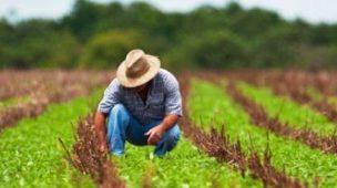 agricultor de chapéu de palha, agachado na lavoura
