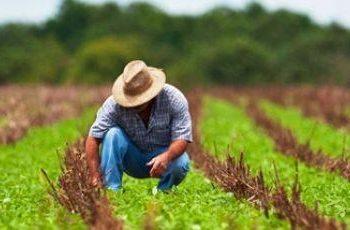 Empreendedorismo rural no Brasil