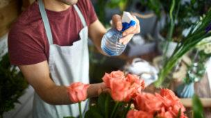 garoto em casa molhando as flores que preparou para venda